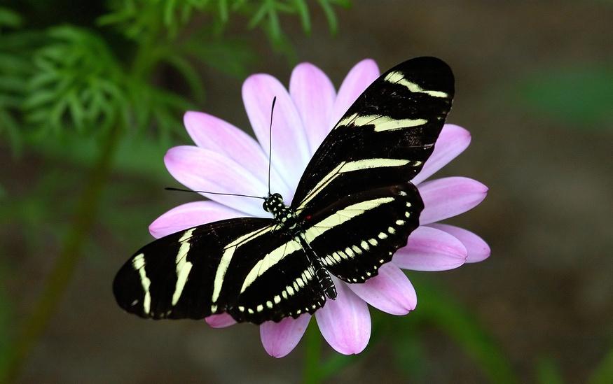 butterfly landing on flower spirit unlimited